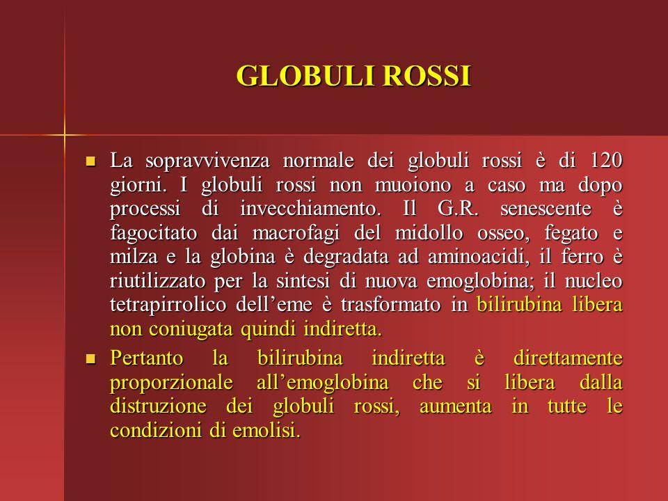 GLOBULI ROSSI La sopravvivenza normale dei globuli rossi è di 120 giorni. I globuli rossi non muoiono a caso ma dopo processi di invecchiamento. Il G.
