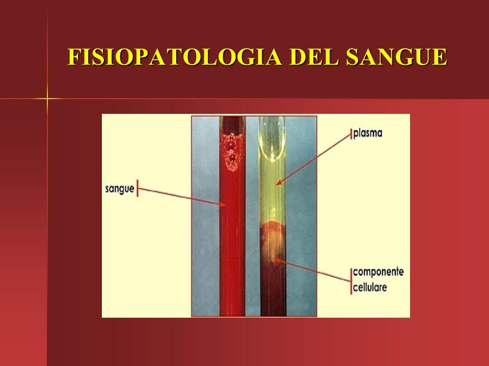 FISIOPATOLOGIA DEL SANGUE Esistono due classi principali nelle sieroproteiene: albumina e globuline.