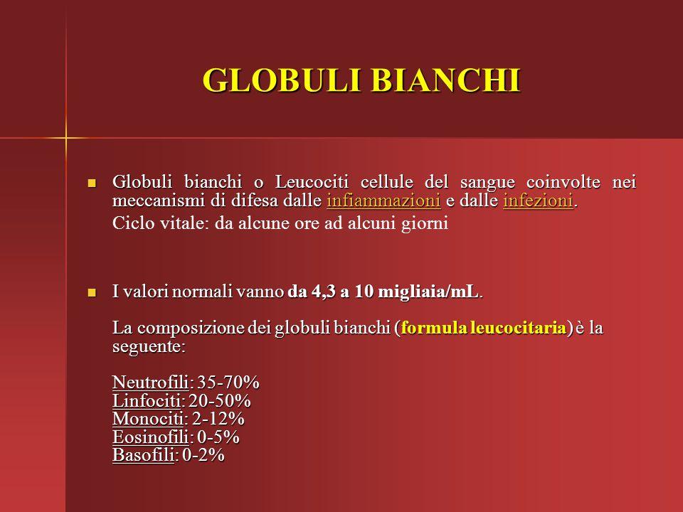 GLOBULI BIANCHI Globuli bianchi o Leucociti cellule del sangue coinvolte nei meccanismi di difesa dalle infiammazioni e dalle infezioni. Globuli bianc