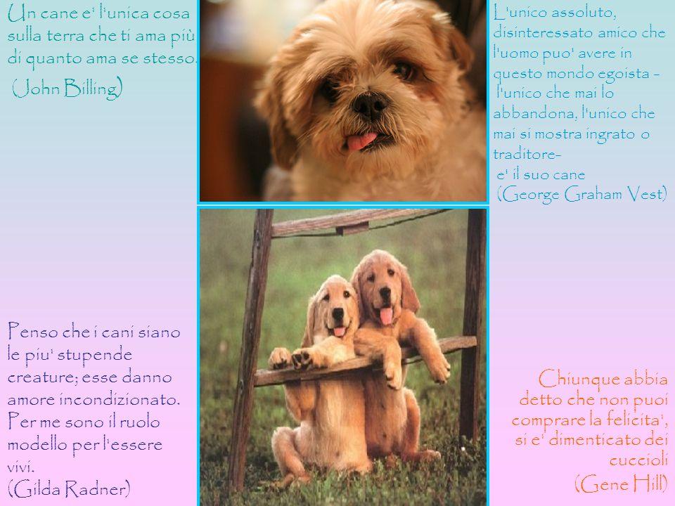 Chiunque abbia detto che non puoi comprare la felicita', si e' dimenticato dei cuccioli (Gene Hill) Un cane e' l'unica cosa sulla terra che ti ama più