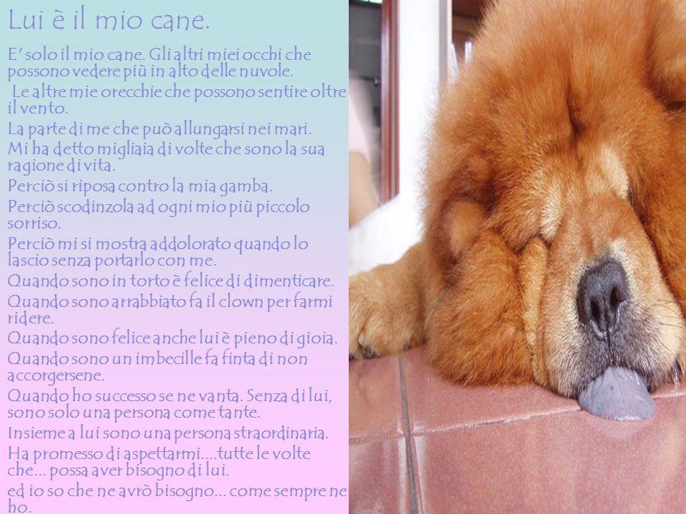 Lui è il mio cane. E' solo il mio cane. Gli altri miei occhi che possono vedere più in alto delle nuvole. Le altre mie orecchie che possono sentire ol