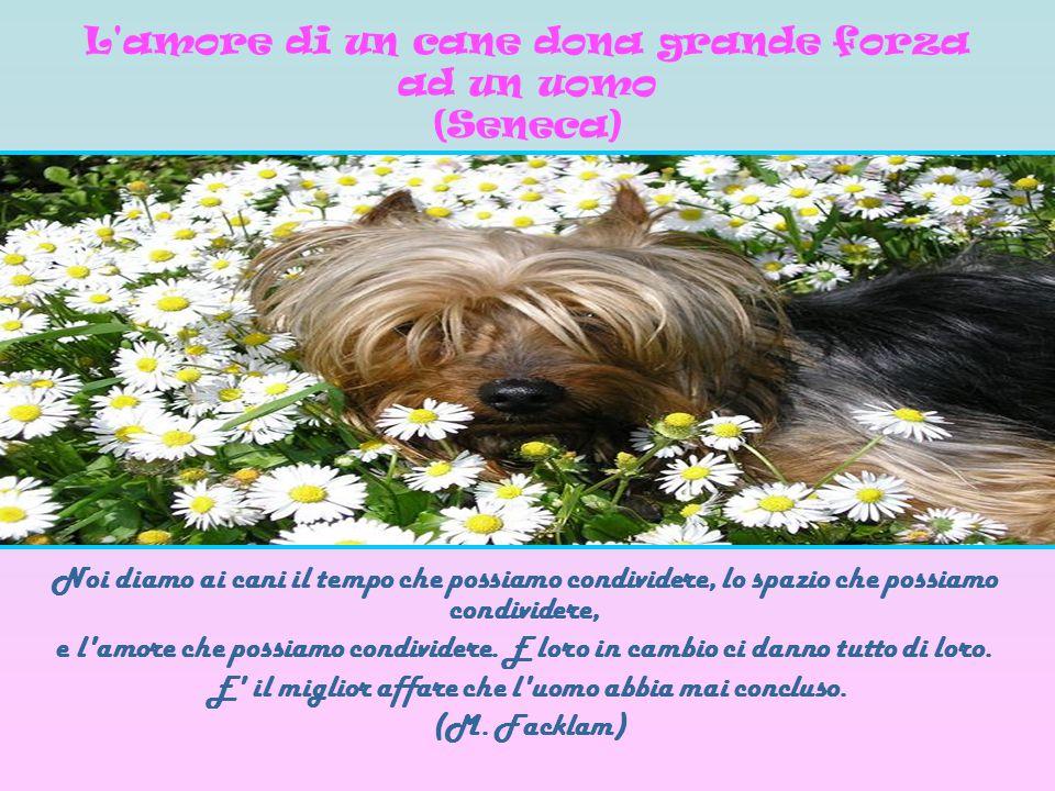 Noi diamo ai cani il tempo che possiamo condividere, lo spazio che possiamo condividere, e l'amore che possiamo condividere. E loro in cambio ci danno
