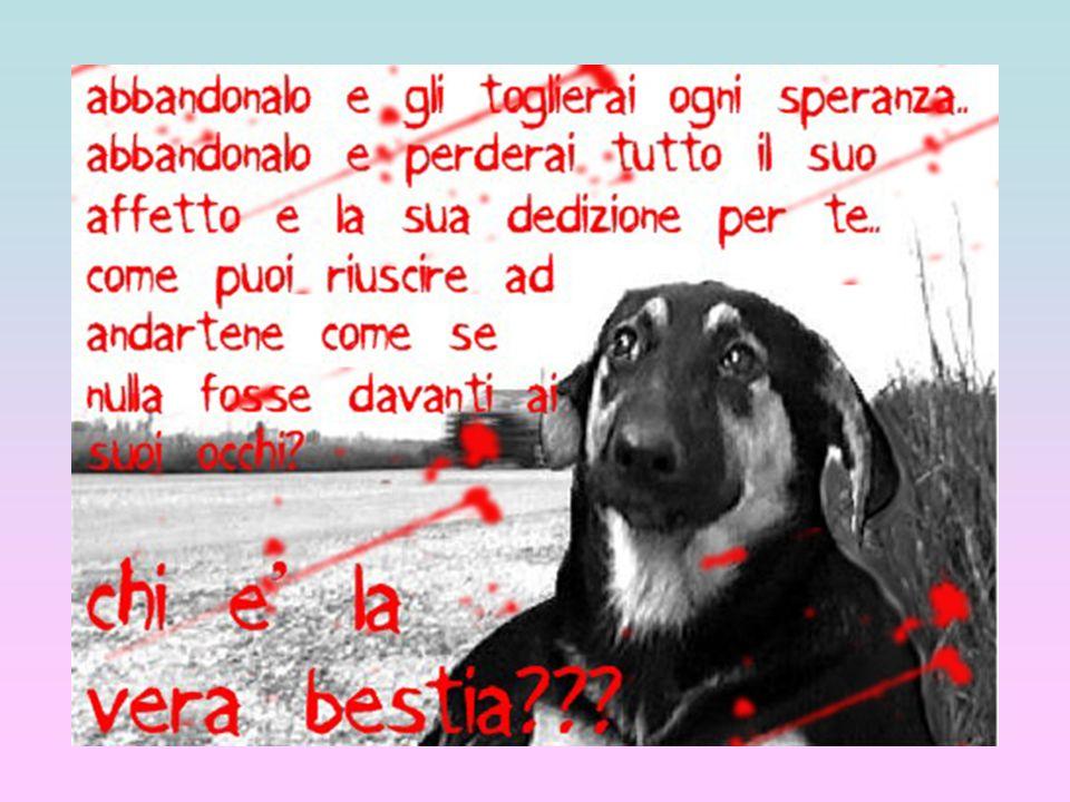 CUORE DI CANE (di Maria Monti) ….….Quando ti sento passare il mio cuore di cane freme di gioia.