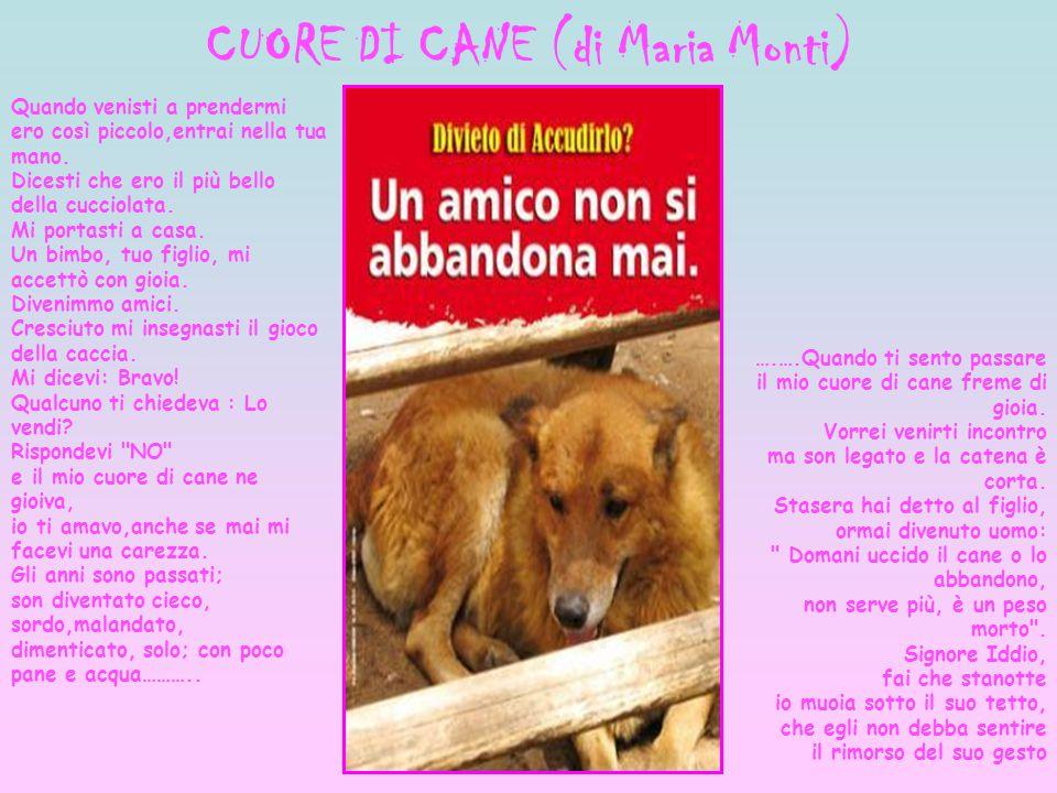 CUORE DI CANE (di Maria Monti) ….….Quando ti sento passare il mio cuore di cane freme di gioia. Vorrei venirti incontro ma son legato e la catena è co