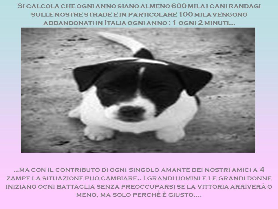 Si calcola che ogni anno siano almeno 600 mila i cani randagi sulle nostre strade e in particolare 100 mila vengono abbandonati in Italia ogni anno :