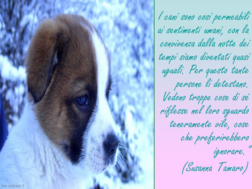 I cani sono così permeabili ai sentimenti umani, con la convivenza dalla notte dei tempi siamo diventati quasi uguali. Per questo tante persone li det