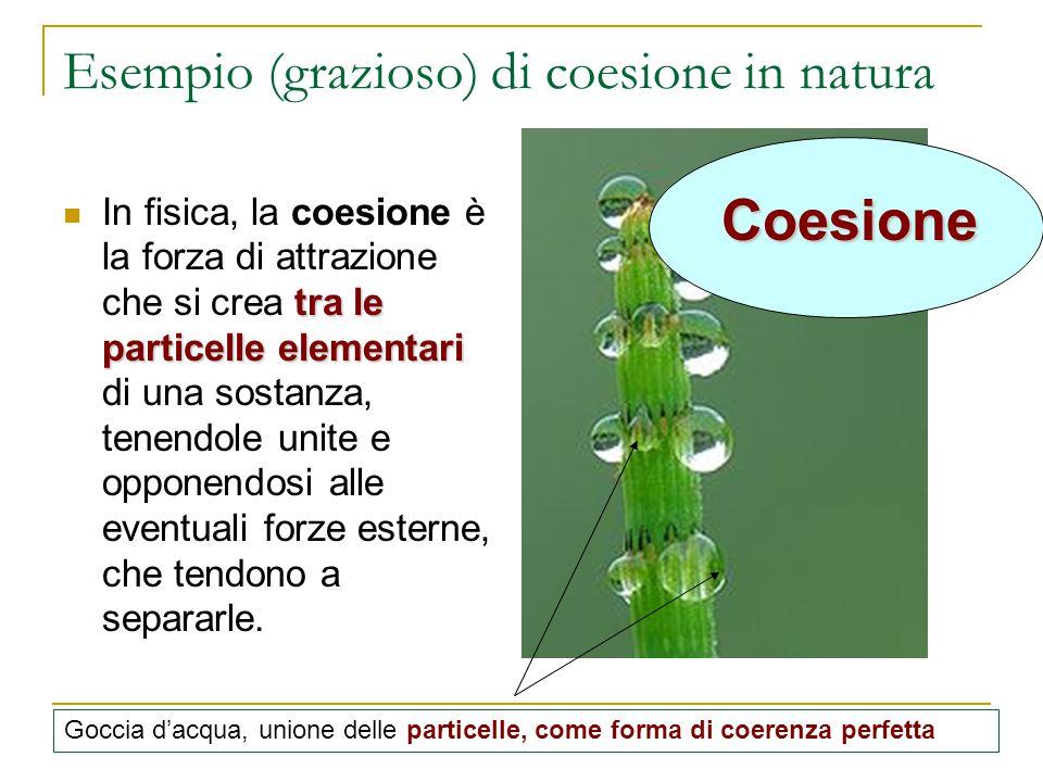 Esempio (grazioso) di coesione in natura tra le particelle elementari In fisica, la coesione è la forza di attrazione che si crea tra le particelle el