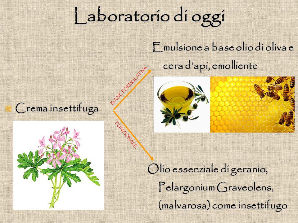 Laboratorio di oggi Crema insettifuga Emulsione a base olio di oliva e cera d'api, emolliente Olio essenziale di geranio, Pelargonium Graveolens, (malvarosa) come insettifugo BASE FORMULATIVA FUNZIONALE