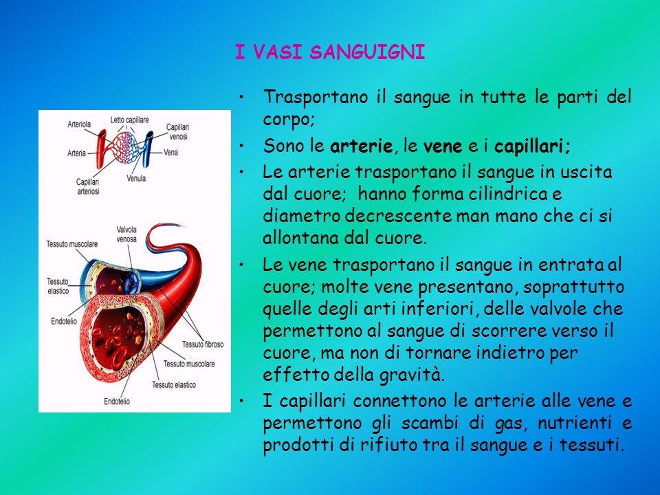 I VASI SANGUIGNI Trasportano il sangue in tutte le parti del corpo; Sono le arterie, le vene e i capillari; Le arterie trasportano il sangue in uscita