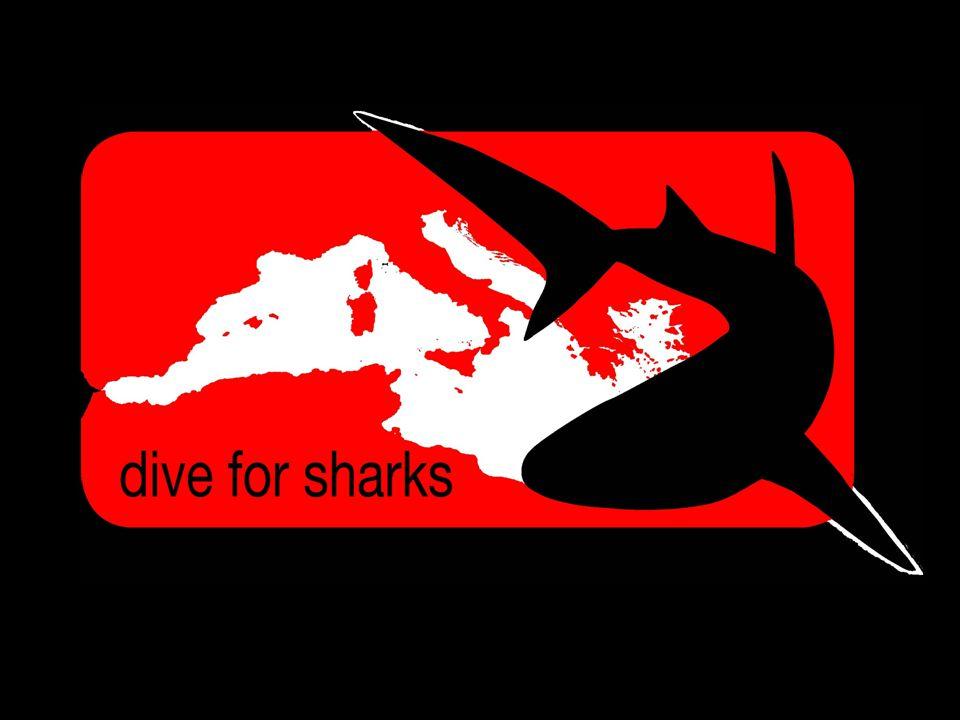 Squali: Non solo il grande squalo bianco Dive for Sharks Esistono circa 500 specie diverse di squalo