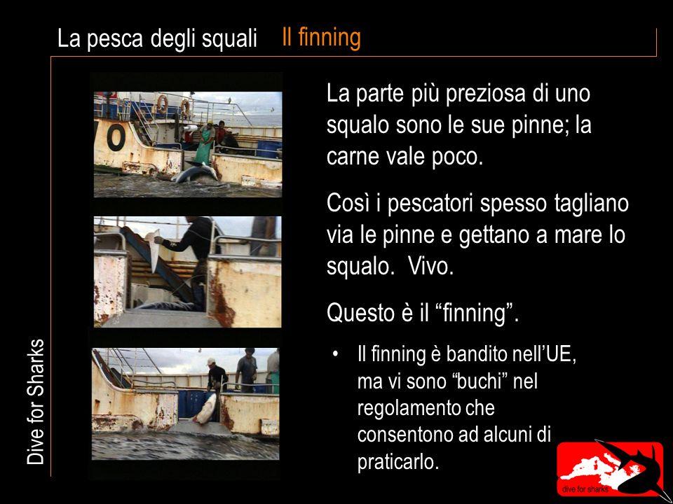 Il finning Il finning è bandito nell'UE, ma vi sono buchi nel regolamento che consentono ad alcuni di praticarlo.