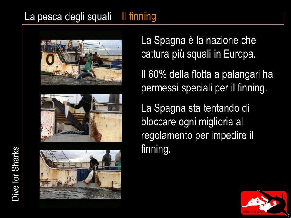 Il finning La Spagna è la nazione che cattura più squali in Europa.