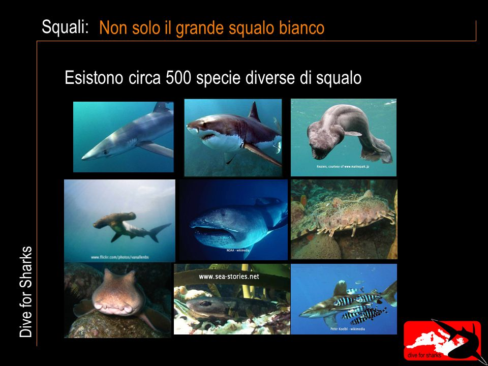Squali:Grandi e piccoli Lo squalo balena è lungo più di 10 metri - più di un autobus Lo squalo pigmeo non raggiunge i 25 cm - le dimensioni di una scarpa Dive for Sharks