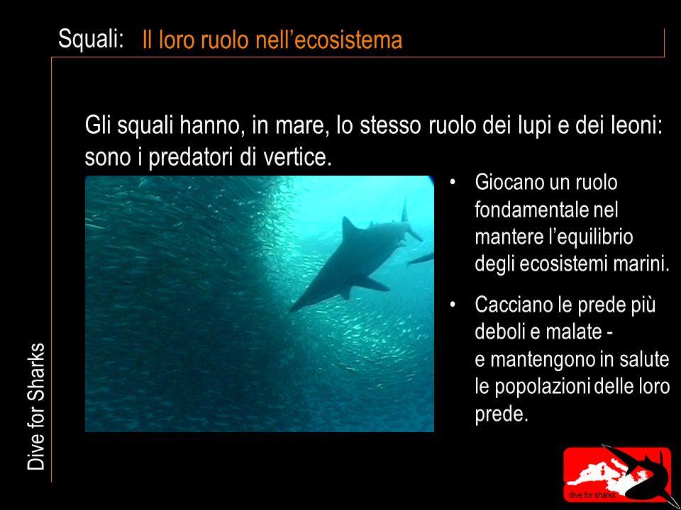 Squali: Il loro ruolo nell'ecosistema Giocano un ruolo fondamentale nel mantere l'equilibrio degli ecosistemi marini.
