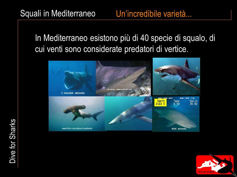 Squali in Mediterraneo Un'incredibile varietà... In Mediterraneo esistono più di 40 specie di squalo, di cui venti sono considerate predatori di verti