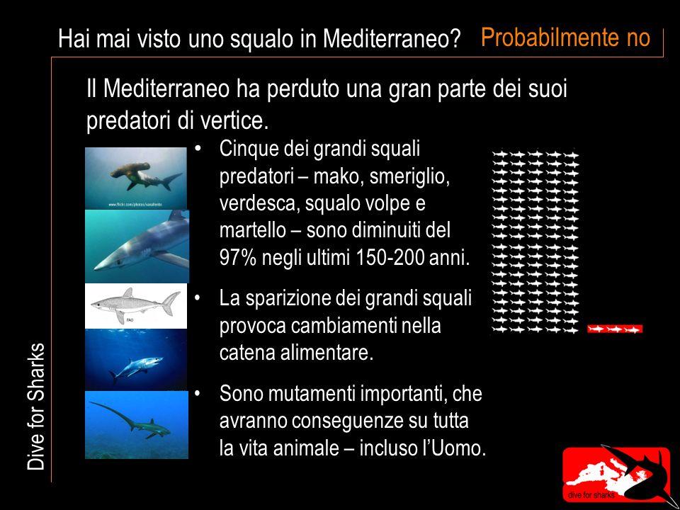 La pesca degli squali La situazione per il consumoper le pinneper errore Ogni anno vengono pescati 75 milioni di squali: Dive for Sharks L' UE è un consumatore e trader importante di carne di squalo Spagna, Italia e Francia sono i maggiori consumatori La Spagna è il paese europeo che cattura il maggior numero di squali Le pinne sono la parte più preziosa dello squalo, ingrediente principale della zuppa di pinne di pescecane