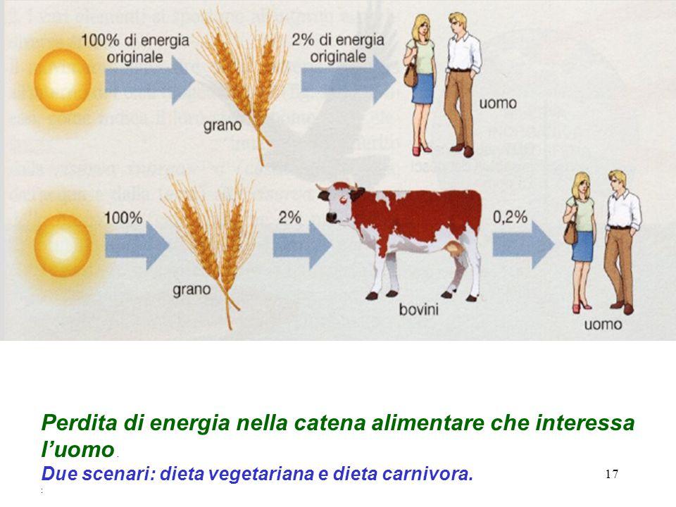 17 Perdita di energia nella catena alimentare che interessa l'uomo.