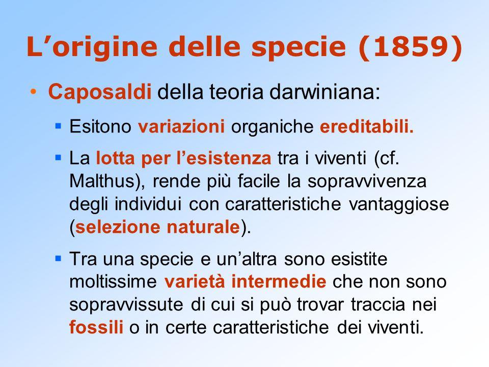 Darwin filosofo.