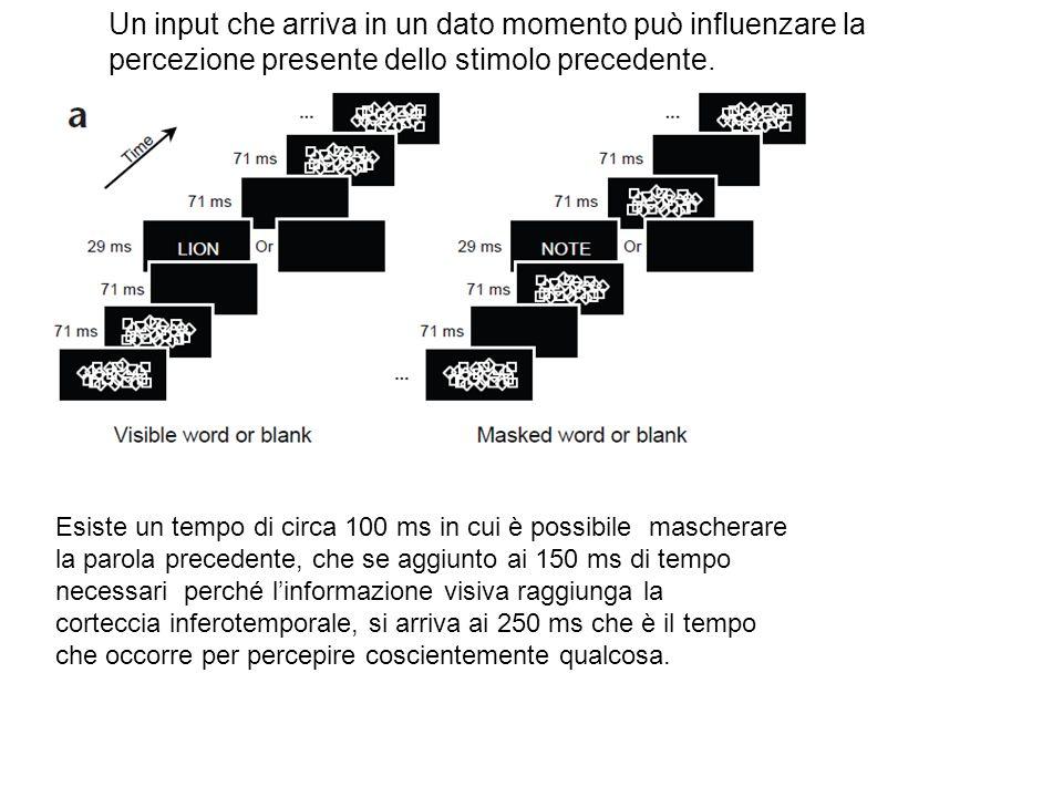 Un input che arriva in un dato momento può influenzare la percezione presente dello stimolo precedente. Esiste un tempo di circa 100 ms in cui è possi