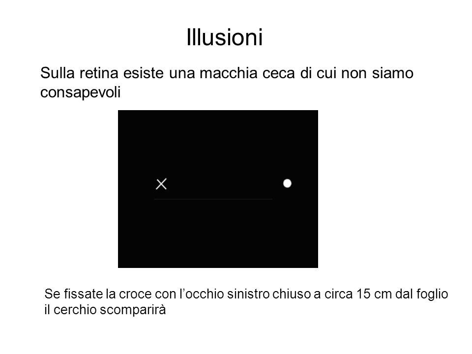 Illusioni Sulla retina esiste una macchia ceca di cui non siamo consapevoli Se fissate la croce con l'occhio sinistro chiuso a circa 15 cm dal foglio