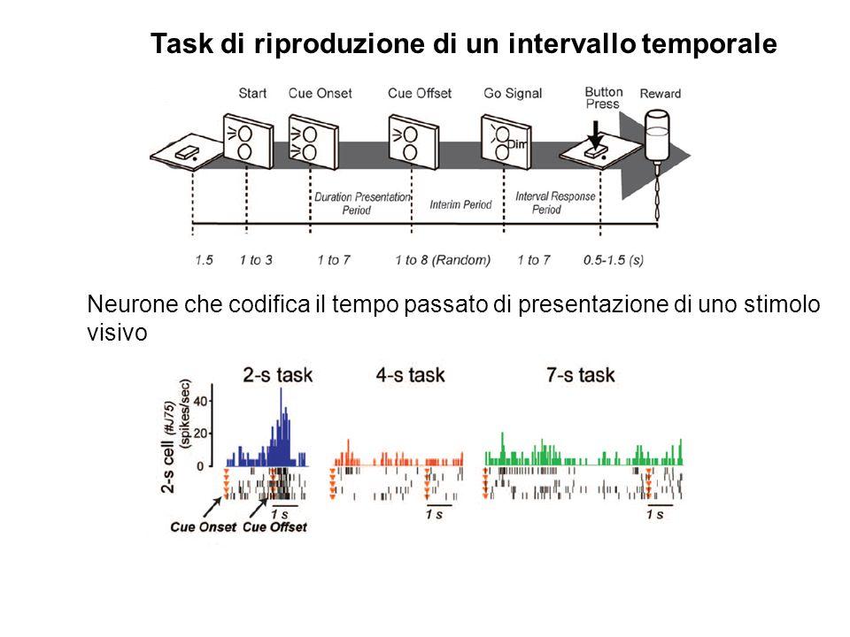 Neurone che codifica il tempo passato di presentazione di uno stimolo visivo Task di riproduzione di un intervallo temporale