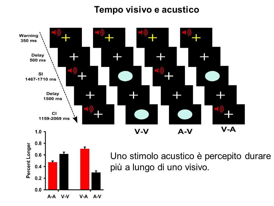 Tempo visivo e acustico Uno stimolo acustico è percepito durare più a lungo di uno visivo.
