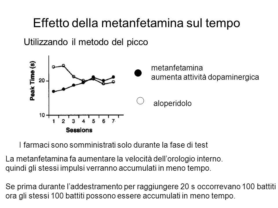 Effetto della metanfetamina sul tempo Utilizzando il metodo del picco aloperidolo metanfetamina aumenta attività dopaminergica La metanfetamina fa aum