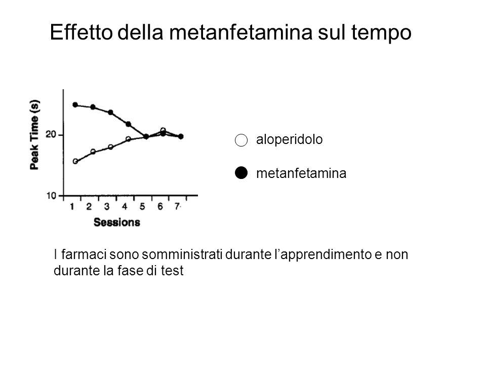Effetto della metanfetamina sul tempo aloperidolo metanfetamina I farmaci sono somministrati durante l'apprendimento e non durante la fase di test