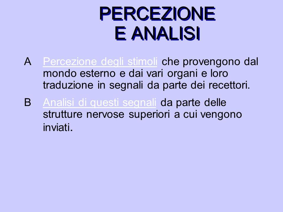 PERCEZIONE E ANALISI APercezione degli stimoli che provengono dal mondo esterno e dai vari organi e loro traduzione in segnali da parte dei recettori.