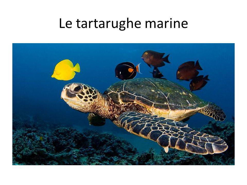 Le tartarughe marine