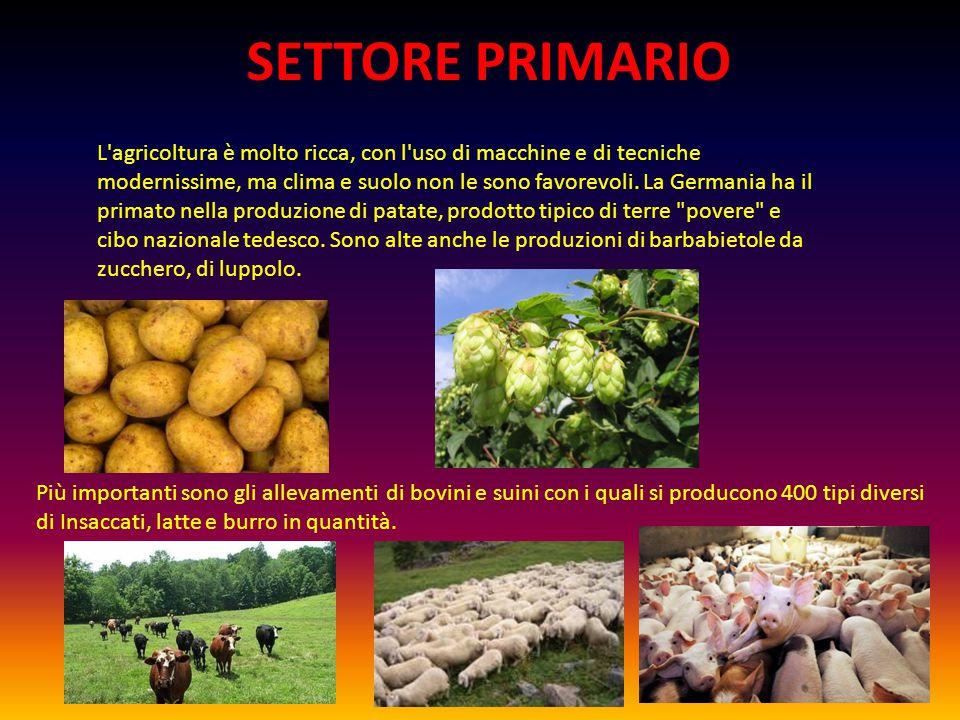 SETTORE PRIMARIO L agricoltura è molto ricca, con l uso di macchine e di tecniche modernissime, ma clima e suolo non le sono favorevoli.