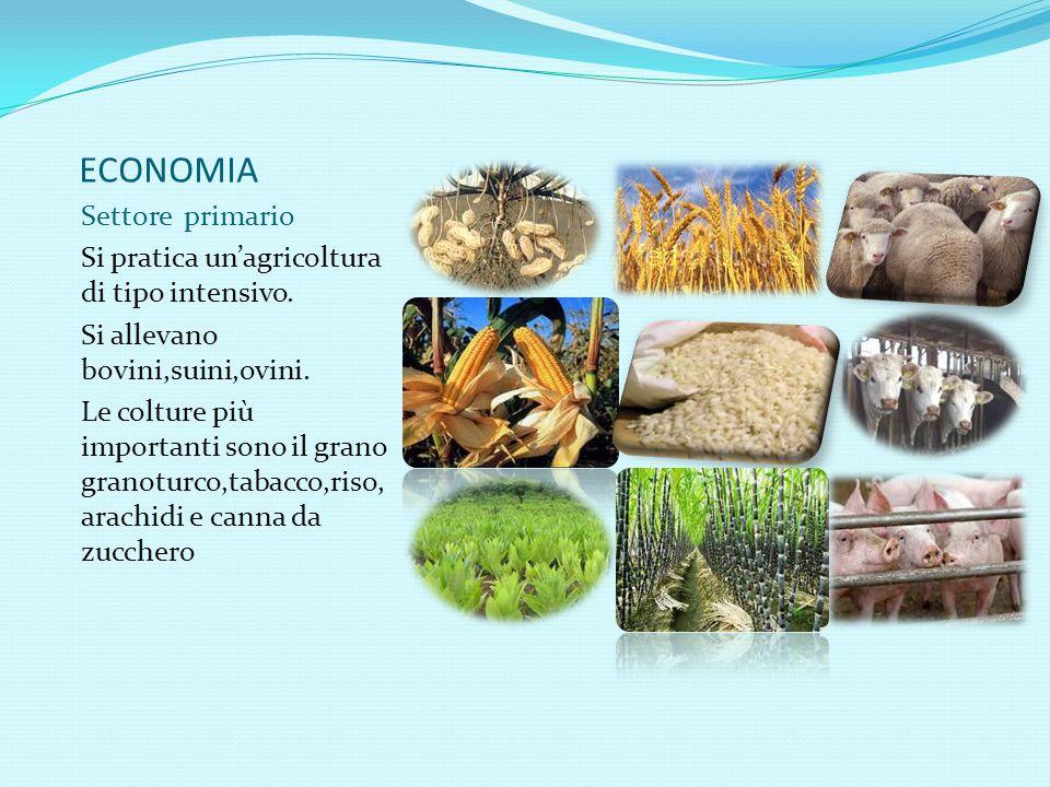 ECONOMIA Settore primario Si pratica un'agricoltura di tipo intensivo. Si allevano bovini,suini,ovini. Le colture più importanti sono il grano granotu