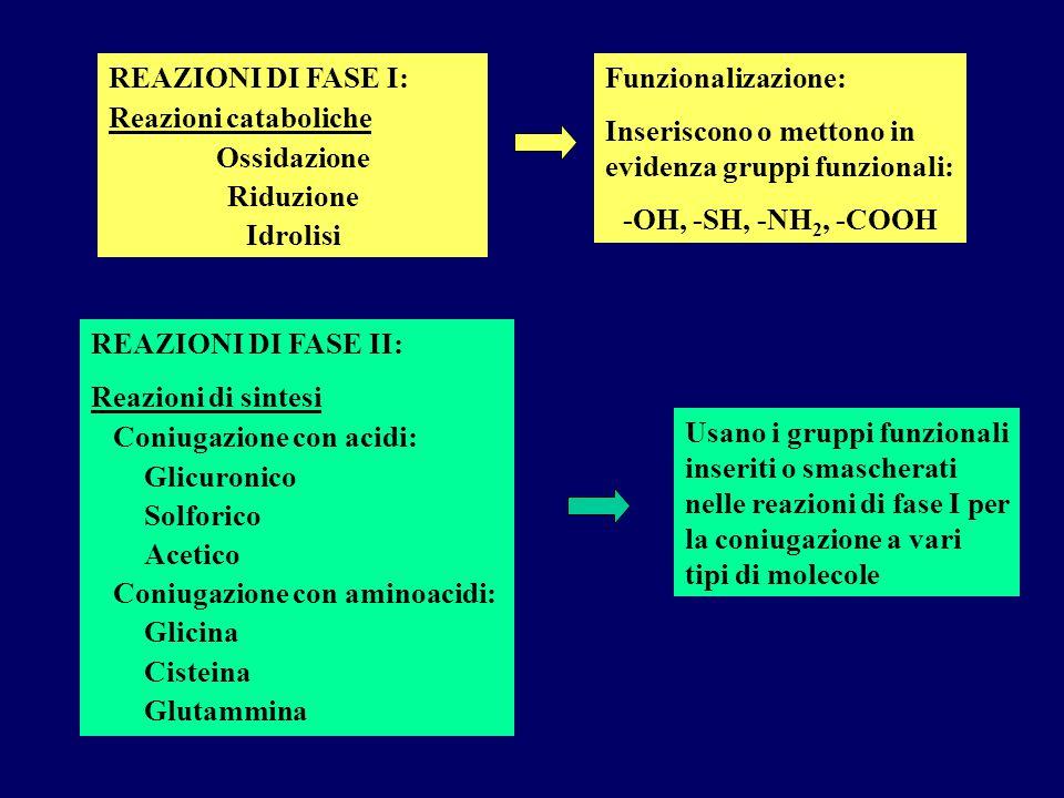 REAZIONI DI FASE I: Reazioni cataboliche Ossidazione Riduzione Idrolisi Funzionalizazione: Inseriscono o mettono in evidenza gruppi funzionali: -OH, -
