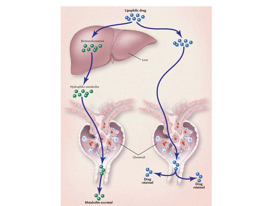 Alcuni FANS Chinidina SSRI Inibiscono il metabolismo di: Warfarin Tolbutamide Metotrexate Conseguente rischio di: Episodi emorragici Crisi ipoglicemiche Mielosoppressione e danno renale