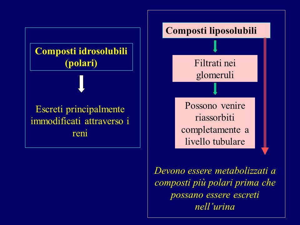 Composti idrosolubili (polari) Escreti principalmente immodificati attraverso i reni Composti liposolubili Filtrati nei glomeruli Possono venire riass