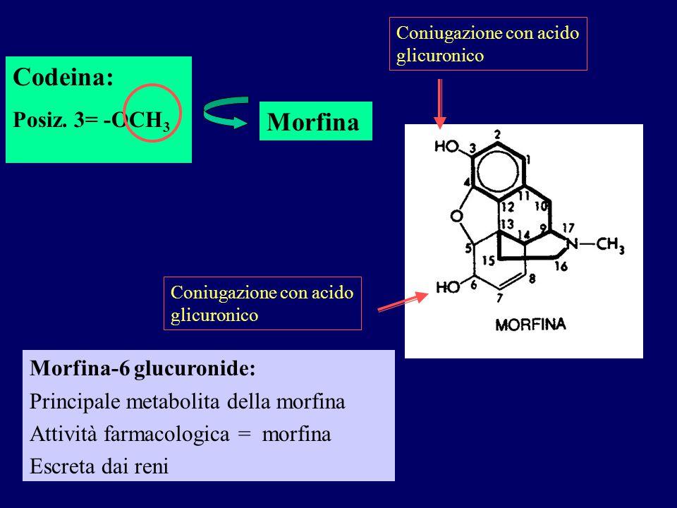 Codeina: Posiz. 3= -OCH 3 Coniugazione con acido glicuronico Morfina-6 glucuronide: Principale metabolita della morfina Attività farmacologica = morfi