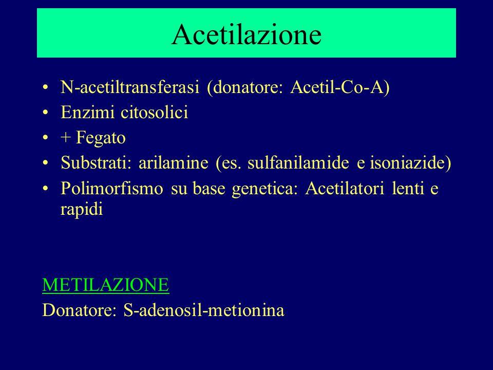 Acetilazione N-acetiltransferasi (donatore: Acetil-Co-A) Enzimi citosolici + Fegato Substrati: arilamine (es. sulfanilamide e isoniazide) Polimorfismo