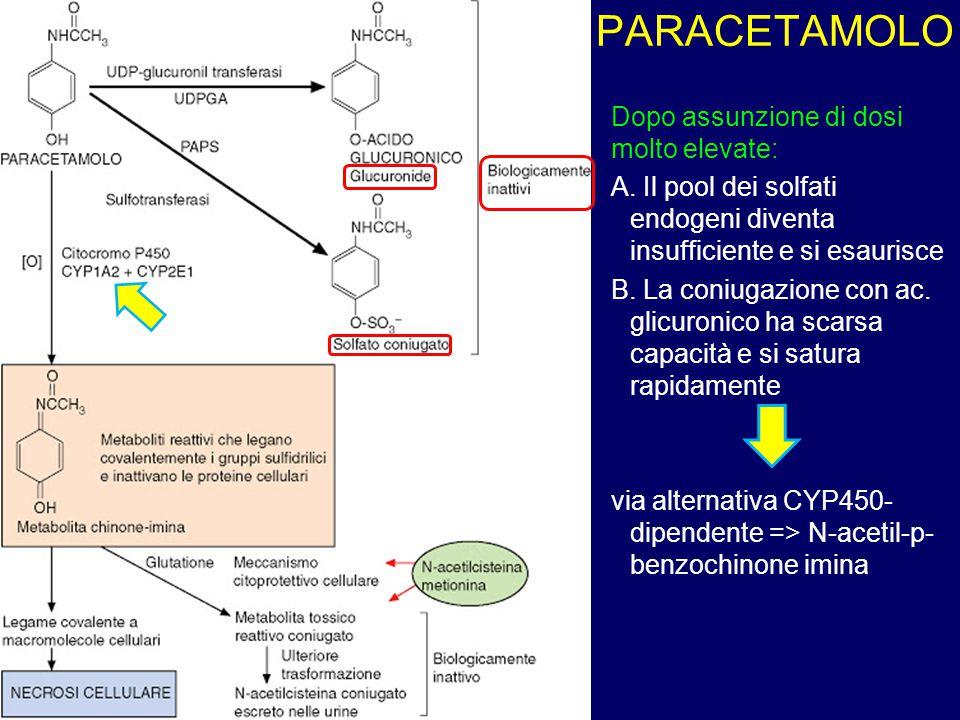 PARACETAMOLO Dopo assunzione di dosi molto elevate: A. Il pool dei solfati endogeni diventa insufficiente e si esaurisce B. La coniugazione con ac. gl