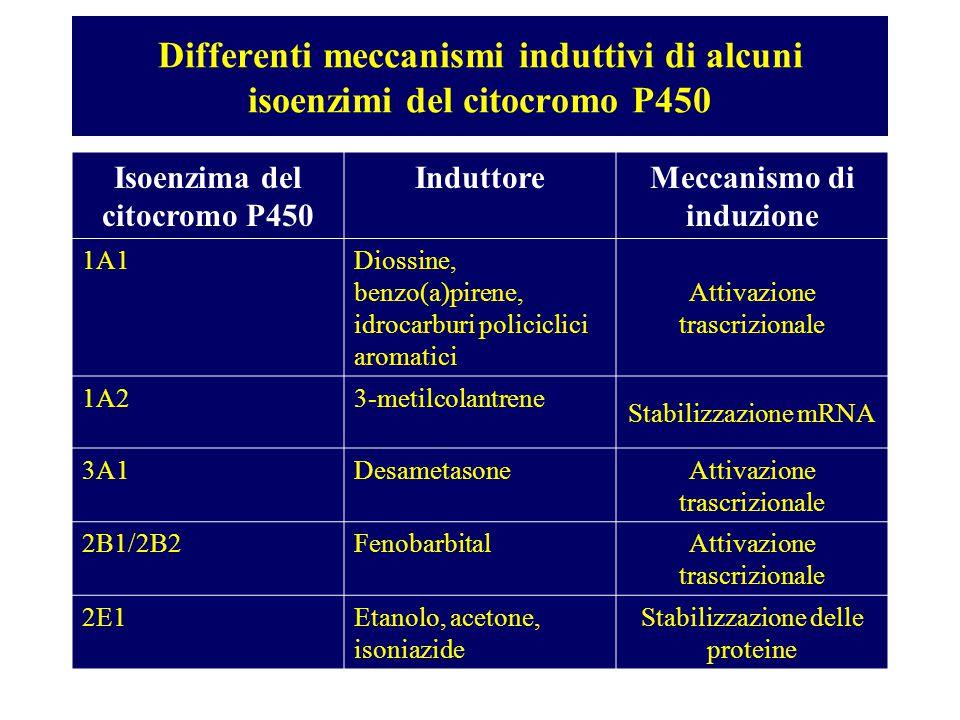 Differenti meccanismi induttivi di alcuni isoenzimi del citocromo P450 Isoenzima del citocromo P450 InduttoreMeccanismo di induzione 1A1Diossine, benz