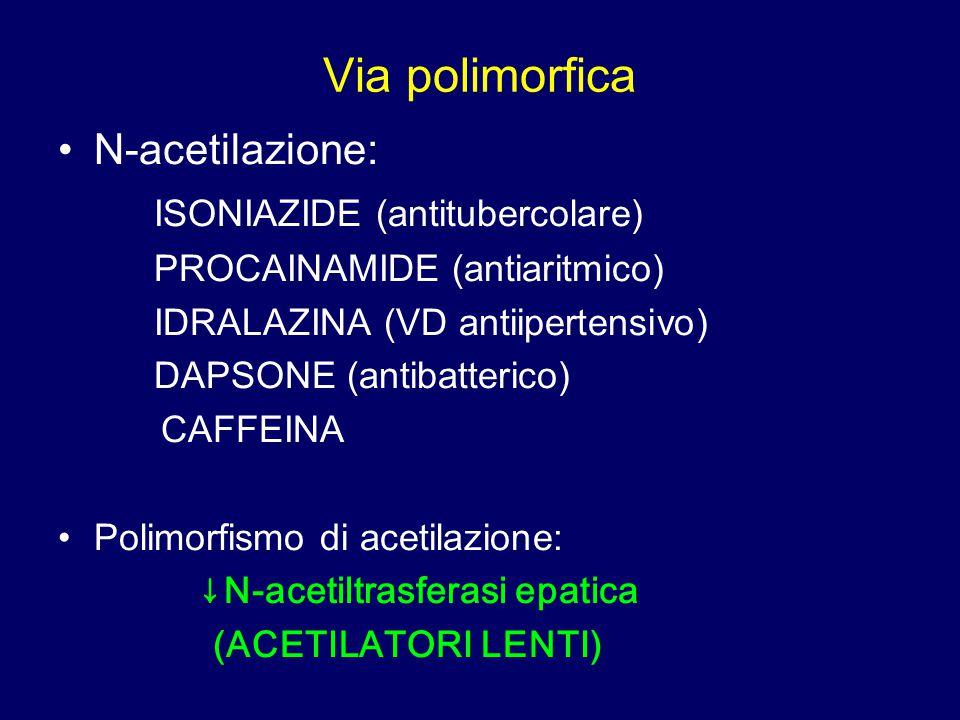 Via polimorfica N-acetilazione: ISONIAZIDE (antitubercolare) PROCAINAMIDE (antiaritmico) IDRALAZINA (VD antiipertensivo) DAPSONE (antibatterico) CAFFE