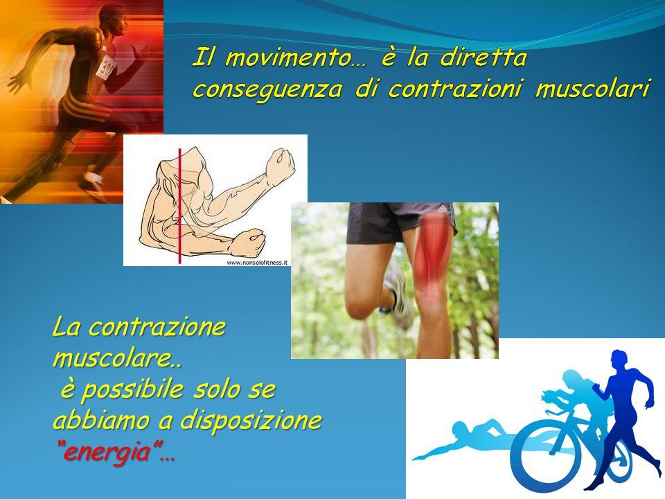 """La contrazione muscolare.. è possibile solo se abbiamo a disposizione """"energia""""… è possibile solo se abbiamo a disposizione """"energia""""…"""