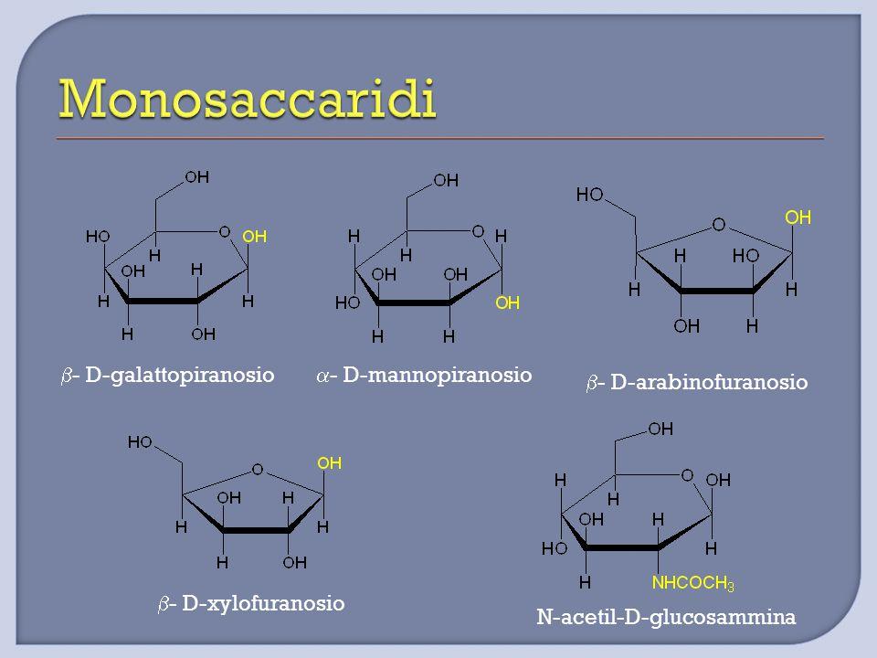  - D-galattopiranosio  - D-mannopiranosio  - D-arabinofuranosio  - D-xylofuranosio N-acetil-D-glucosammina
