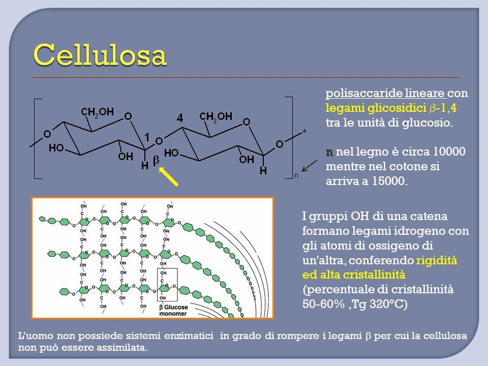 polisaccaride lineare con legami glicosidici  -1,4 tra le unità di glucosio. n n nel legno è circa 10000 mentre nel cotone si arriva a 15000. I grupp