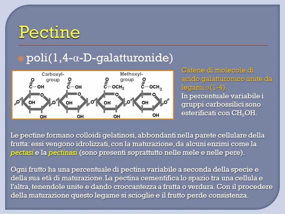  poli(1,4- α -D-galatturonide) Catene di molecole di acido galatturonico unite da legami α (1-4). In percentuale variabile i gruppi carbossilici sono