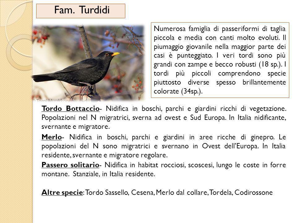 Fam.Turdidi Numerosa famiglia di passeriformi di taglia piccola e media con canti molto evoluti.