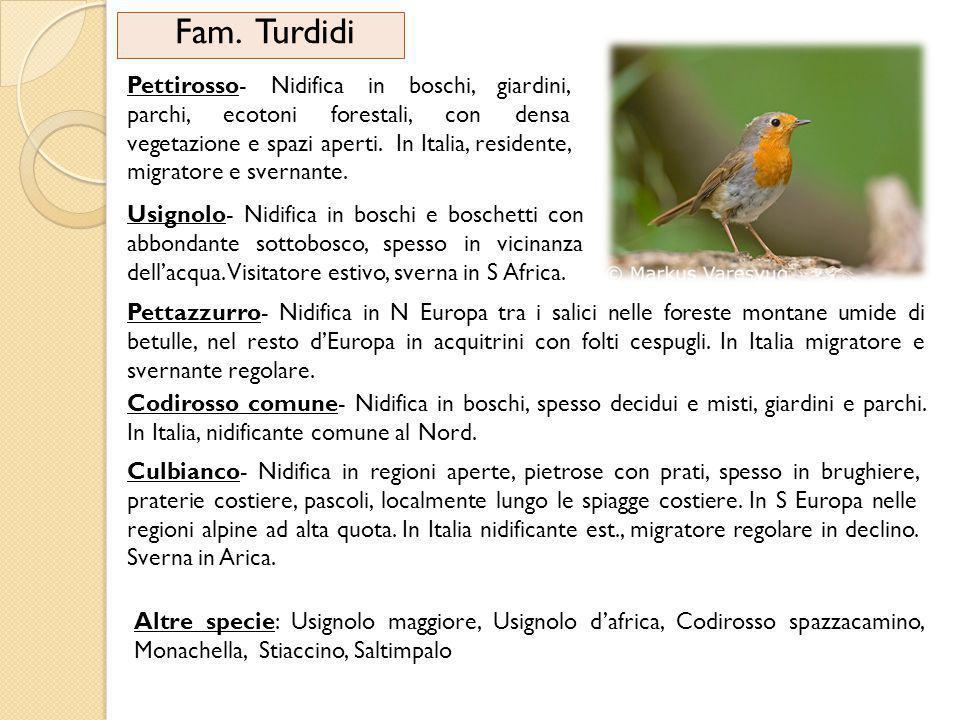 Fam. Turdidi Pettirosso- Nidifica in boschi, giardini, parchi, ecotoni forestali, con densa vegetazione e spazi aperti. In Italia, residente, migrator