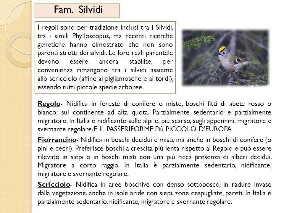 Fam. Silvidi I regoli sono per tradizione inclusi tra i Silvidi, tra i simili Phylloscopus, ma recenti ricerche genetiche hanno dimostrato che non son