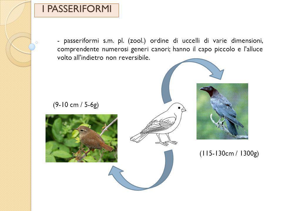 I PASSERIFORMI - passeriformi s.m.pl.
