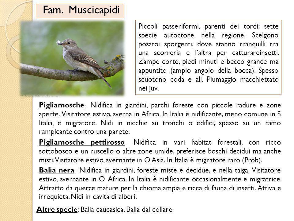 Fam.Muscicapidi Piccoli passeriformi, parenti dei tordi; sette specie autoctone nella regione.