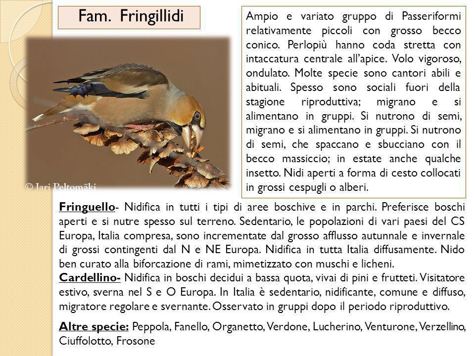 Fam. Fringillidi Ampio e variato gruppo di Passeriformi relativamente piccoli con grosso becco conico. Perlopiù hanno coda stretta con intaccatura cen